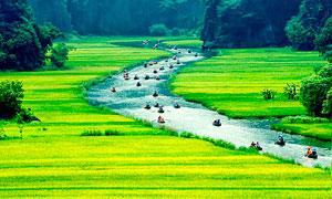 越南宁平农田田园风光摄影图片