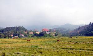 越南岘港田园风光摄影图片