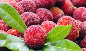新鲜杨梅水果高清摄影图片