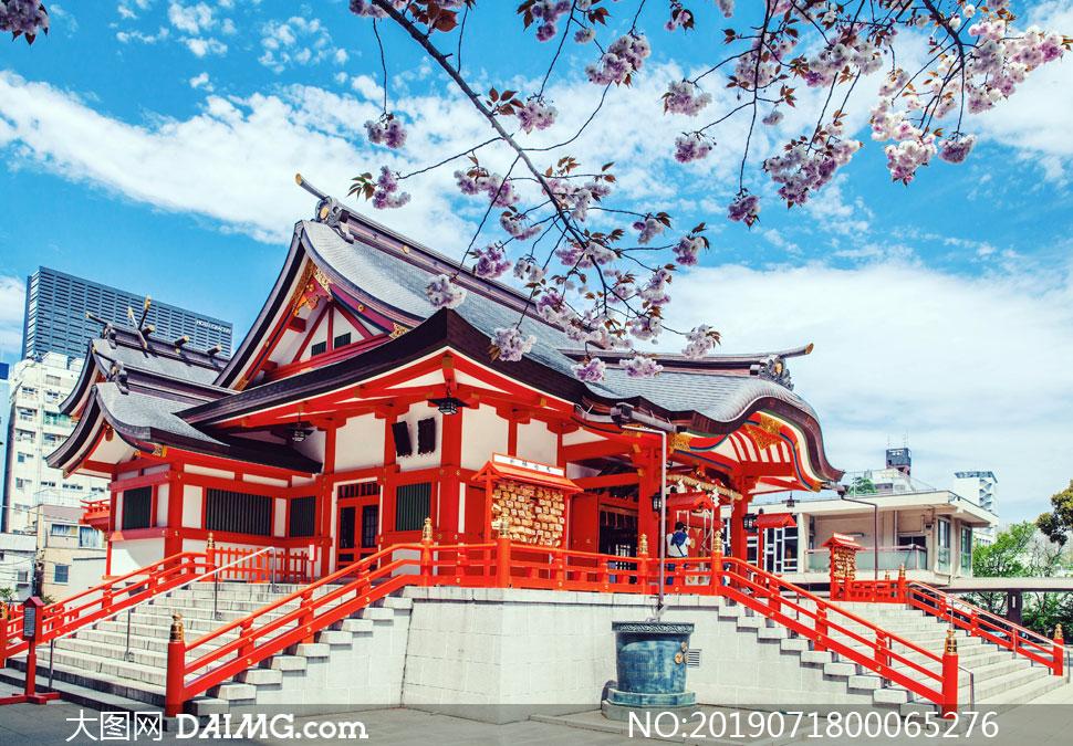 东京新宿花园神社赏樱花摄影图片