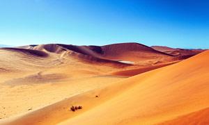 蓝天下的沙漠和沙丘摄影图片