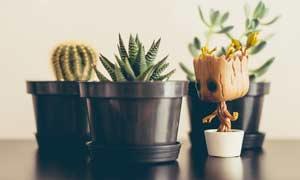 仙人球和多肉植物攝影圖片