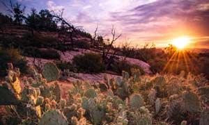 夕陽下的仙人掌植物攝影圖片