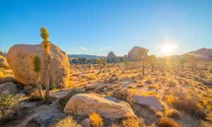 清晨阳光下的沙漠植物摄影图片