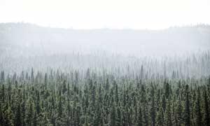 云雾缭绕的森林景观摄影图片