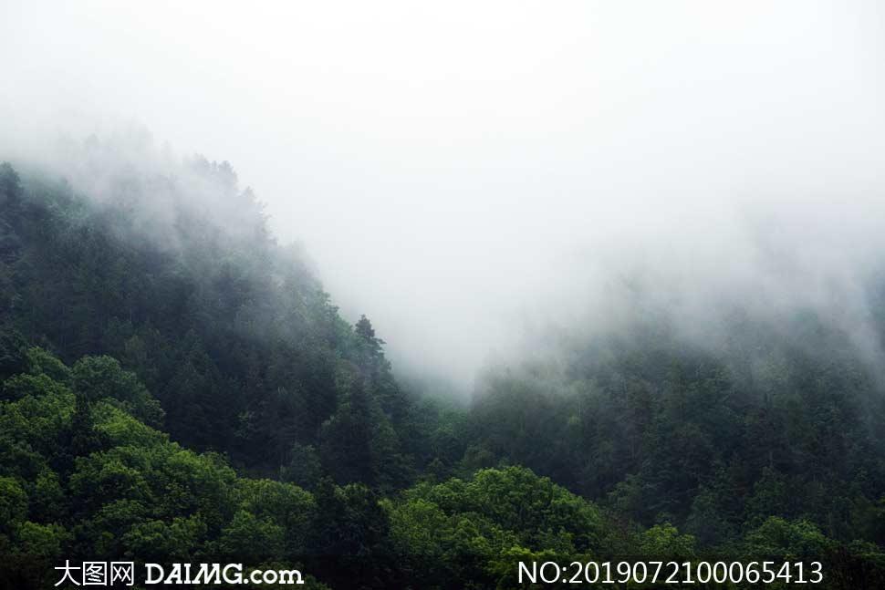 雾气笼罩的森林景观摄影图片