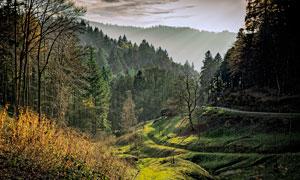 森林中的山路景观摄影图片