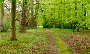 春季公園樹林美景攝影圖片