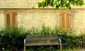 绿叶窗户与灌木丛长椅摄影高清图片