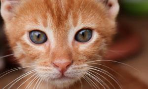 眼睛圆溜溜的可爱猫咪摄影高清图片