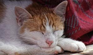 在窝里酣睡的猫猫特写摄影高清图片