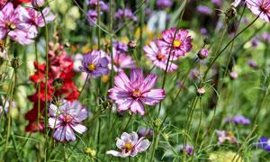 草丛中绽放的鲜花特写摄影高清图片
