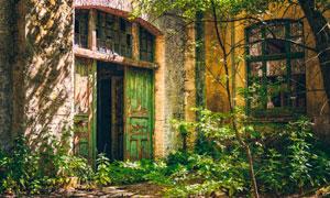 荒废很久了的房子门前植物高清图片