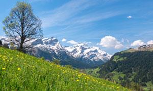 雪山白云花草自然风景摄影高清图片