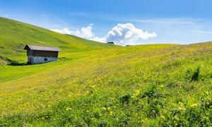 山坡上的房子与花草丛摄影高清图片