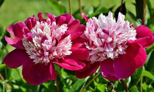 花期绽放花卉植物特写摄影高清图片