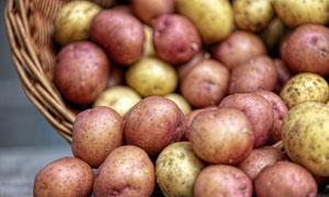 红皮与黄皮的土豆特写摄影 澳门线上必赢赌场