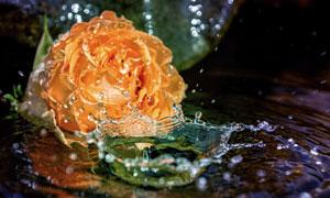 玫瑰花与飞溅起的水花摄影高清图片