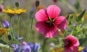 鲜花植物丛生美景特写摄影高清图片