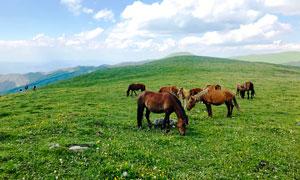 五台山山顶上的马群摄影图片
