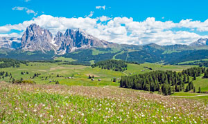 山脚下的山林和野花摄影图片