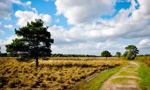 田园农田中的大树和小路摄影图片