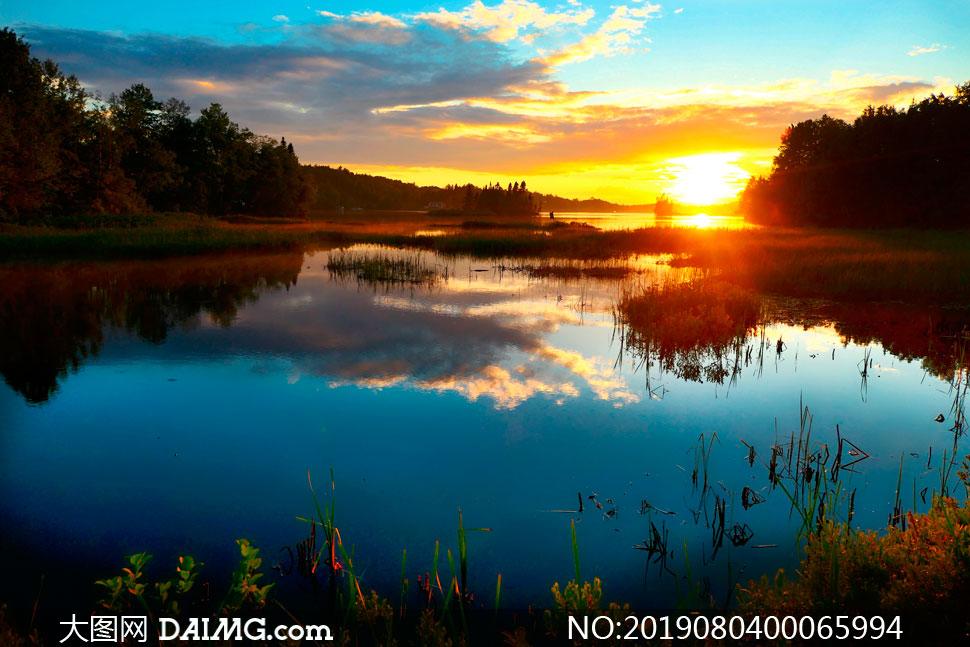 夕陽下的湖泊和水草攝影圖片