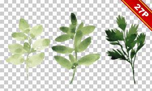多种水彩草本植物叶子主题免抠素材