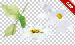 绿叶菊花水彩创意免抠图片图片素材