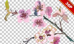 水彩创意樱花树枝主题免抠图片素材