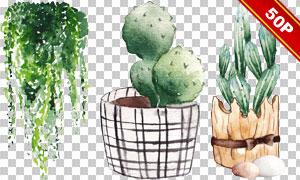 仙人掌与多肉植物水彩创意免抠图片