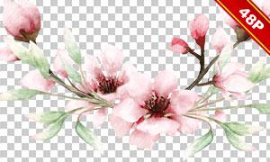 绿叶与粉色的樱花主题水彩免抠素材