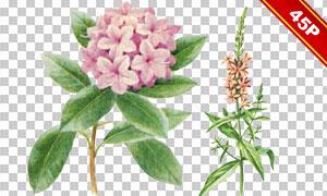 繡球花等多種植物水彩免摳圖片素材