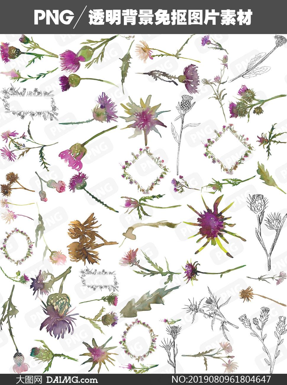 薊花與鮮花邊框等水彩免摳圖片素材