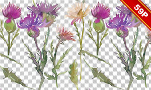 蓟花与鲜花边框等水彩免抠图片素材