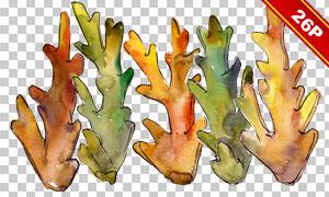 珊瑚海藻生物水彩效果免抠图片素材