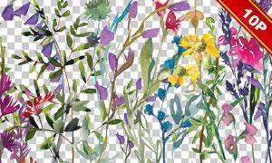 水彩花卉植物装饰元素免抠图片素材