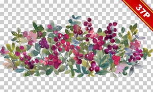 綠葉紅花元素水彩創意免摳圖片素材
