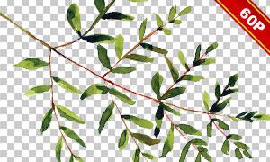 花草植物边框水彩创意设计免抠图片