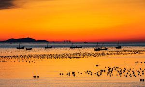 黄昏下的海上渔场高清摄影图片