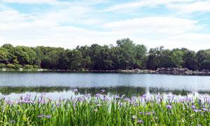 浣花溪公园美丽景观摄影图片
