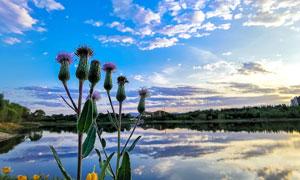 夕阳下的湖泊美景和花朵摄影图片