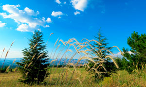 蓝天下的草地和狗尾巴草摄影图片