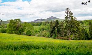 山间树林和美丽的草地摄影图片