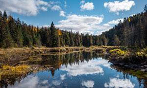 森林中湖泊美景摄影图片