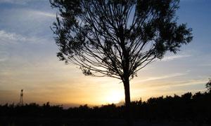 夕阳下公园里的大树剪影摄影图片