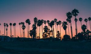 黄昏下的椰树剪影摄影图片