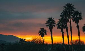黄昏下的椰树剪影风光摄影图片