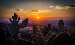 夕阳下的仙人掌摄影图片
