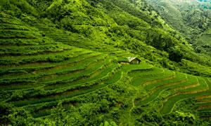大山之中美丽的绿色梯田摄影图片
